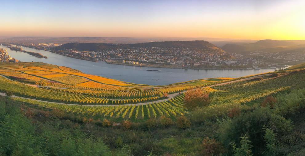 """Blick über die Weinberge in Rheinhessen: Den """"Spar-Euro"""" erhielten jene Kommunen mit den besten Sparbemühungen in Rheinland-Pfalz."""