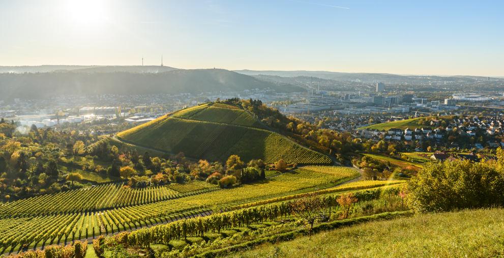 Weinberg in Stuttgart: Auch Kommunen in Baden-Württemberg fordern nun einen Schutzschirm.